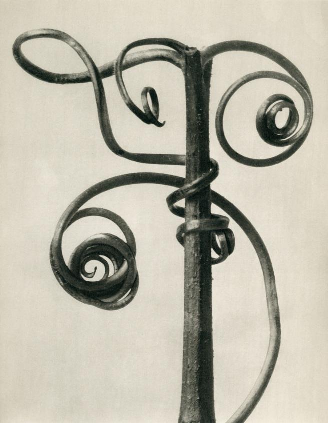 Karl Blossfeldt (1865-1932) 'Cucurbita - Pumpkin tendrils' before 1928