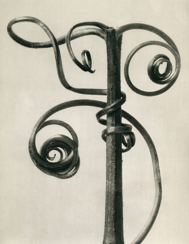 Karl Blossfeldt (1865-1932) 'Cucurbita - Pumpkin tendrils' before 1928