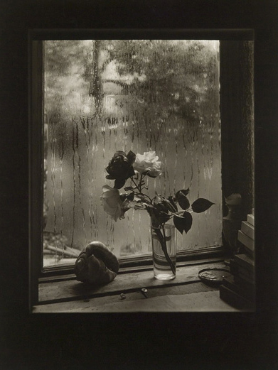 Josef Sudek. 'The Last Rose' from the Rose series. 1956