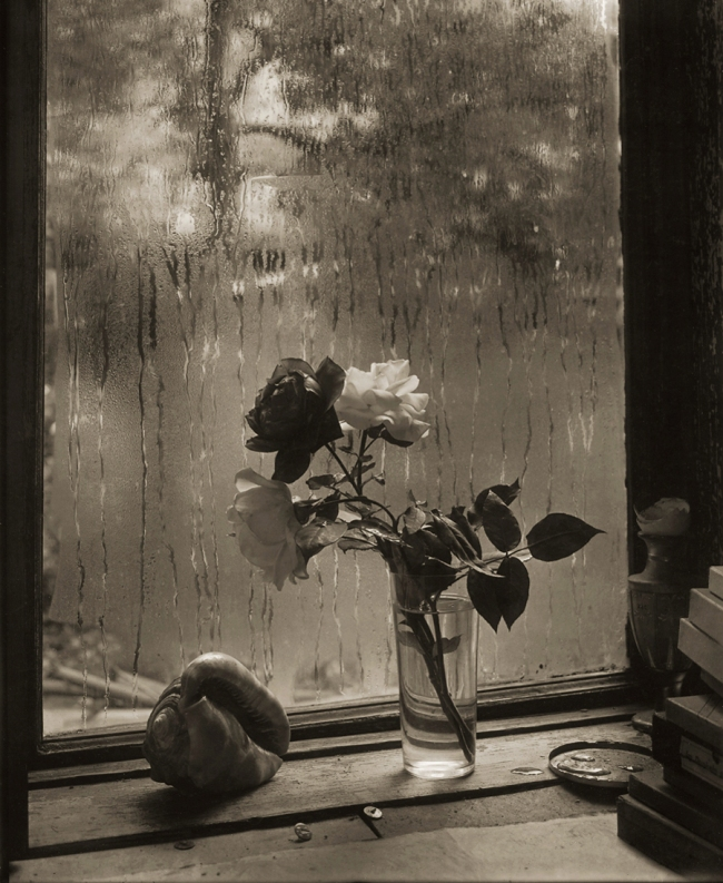 Josef Sudek. 'The Last Rose' 1956