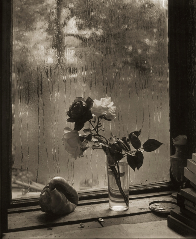 Josef Sudek. 'The Last Rose' 1956