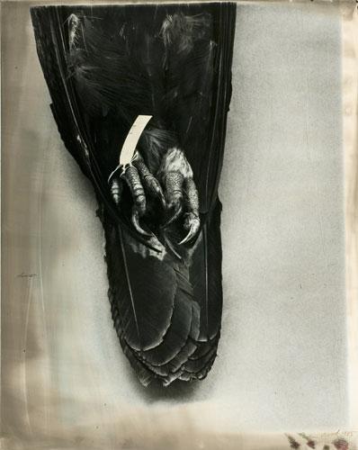 John Wood. 'Eagle Pelt' 1985