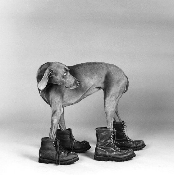 William Wegman. 'Fay Ray' 1988