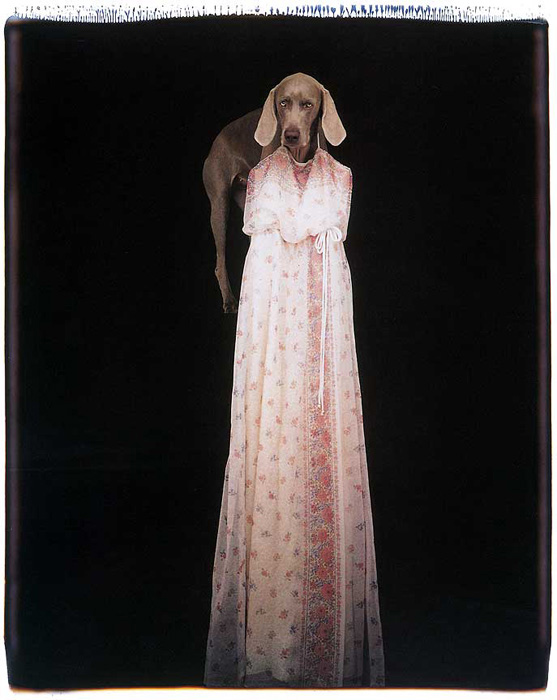 William Wegman. 'Front-Facade' 1993