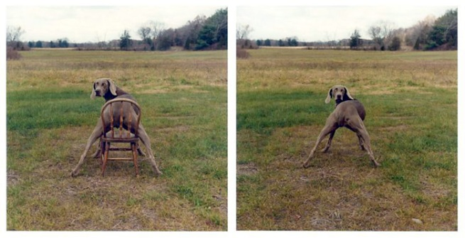 William Wegman. Lawn-Chair-1988