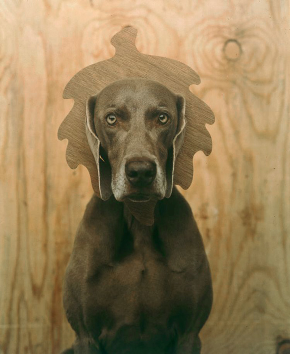 william eggleston viewpoints. William Wegman. #39;Oaken#39; 1992