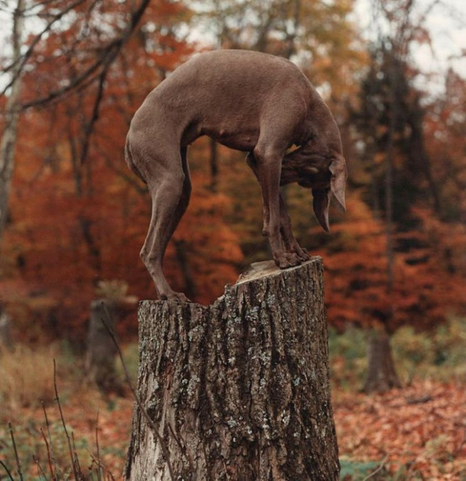 William Wegman. U-Tree-1992