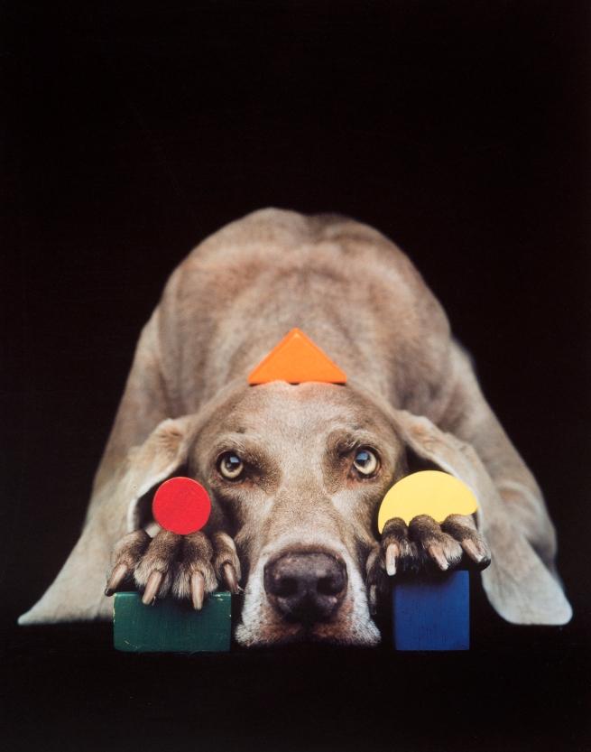 William Wegman. 'Basic Shapes In Color' 1993