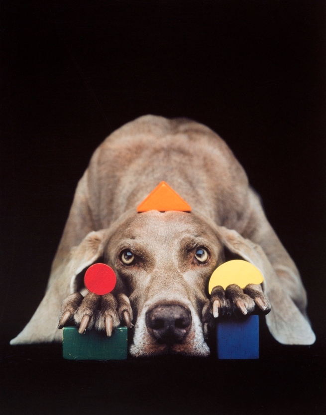 William Wegman. 'Basic Shapes In Color' 1993