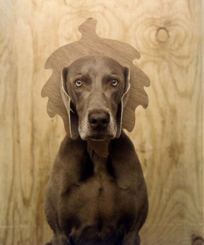 William Wegman. 'Oaken' 1992