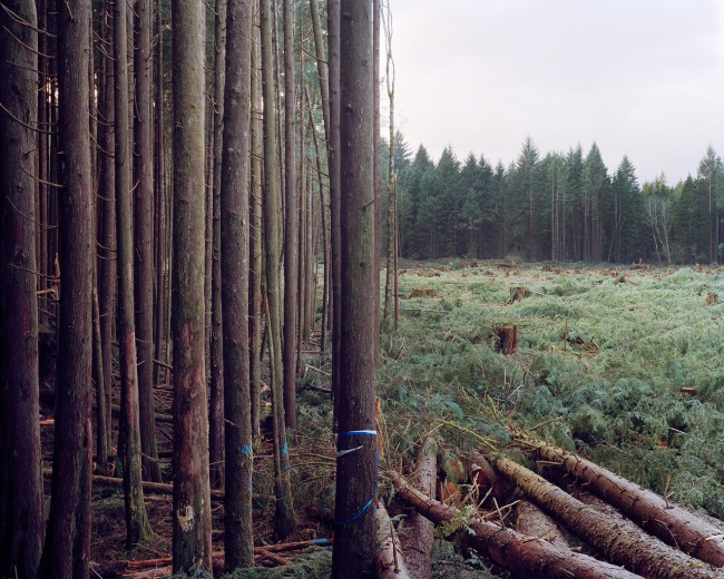 Eirik Johnson(American, b. 1974) 'Freshly Felled Trees, Nemah, Washington' 2006-2008
