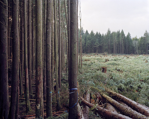 Eirik Johnson. 'Freshly Felled Trees, Nemah, Washington' from the series Sawdust Mountain