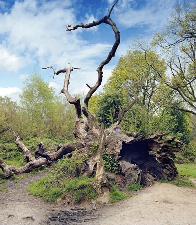 Scott McFarland(Canadian, b. 1975) 'Fallen Oak Tree' 2008