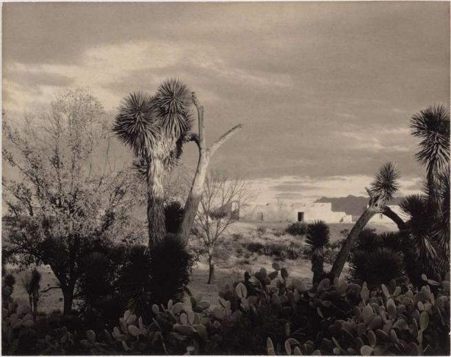 Paul Strand (American, 1890-1976) 'Landscape, near Saltillo, Mexico' 1932