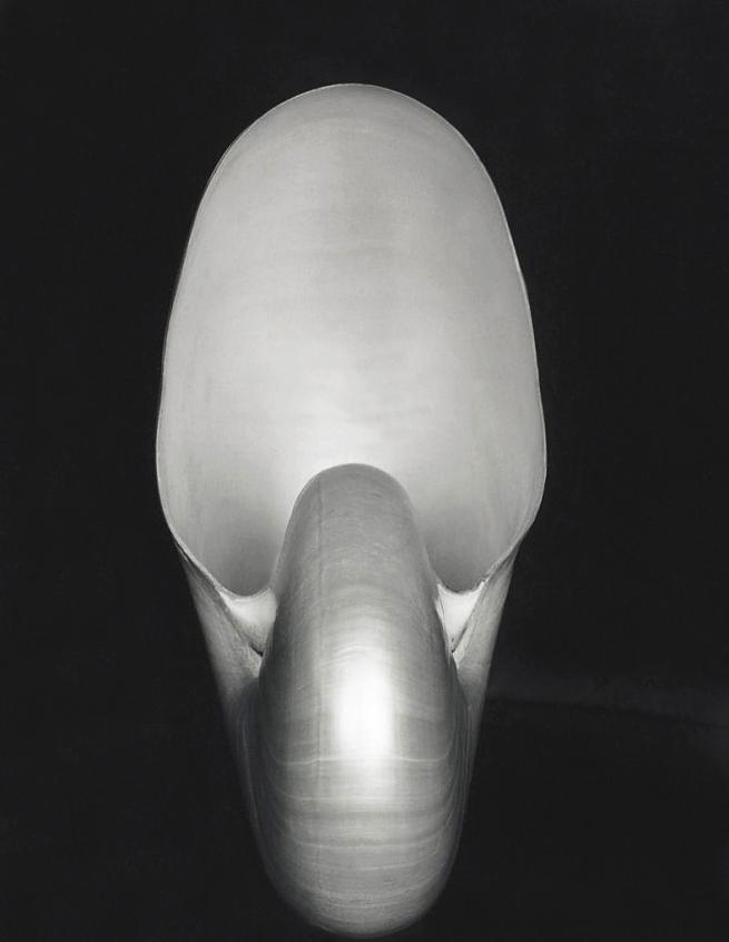Edward Weston. 'Nautilus' 1927