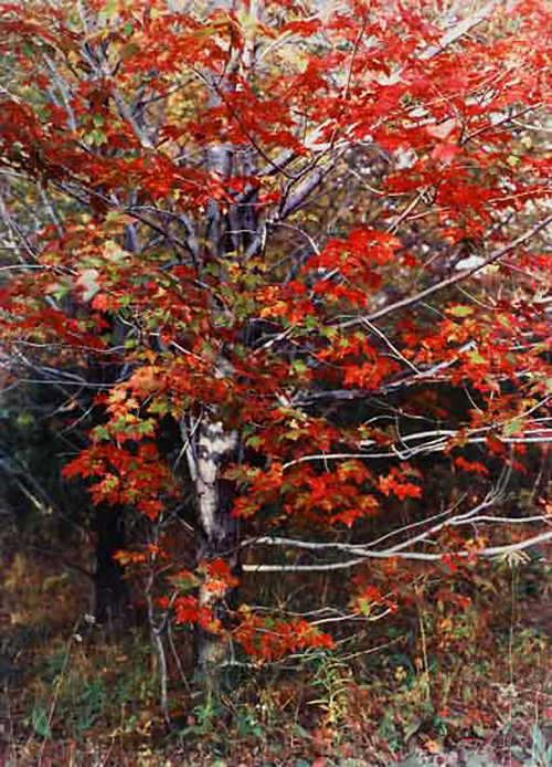 Jeannette Klute (American, 1918-2009) 'Maple Tree - red leaves' Nd (early-mid 1950s)