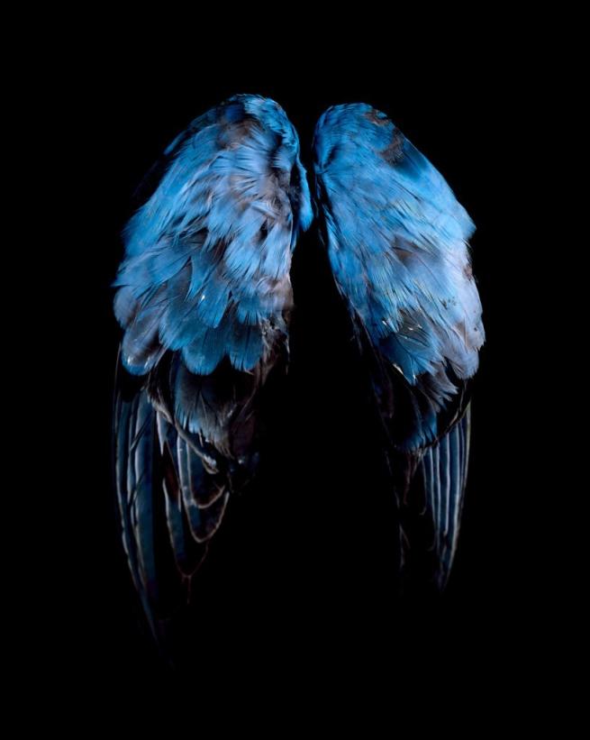 CJ Taylor. 'Blue, Blue, Grey' 2009