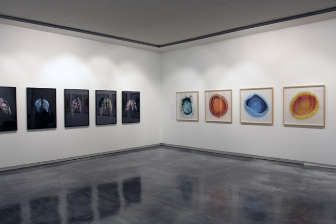 Installation view of 'Little Treasures' showing the work of CJ Taylor (left) and Will Nolan 'Bottle Top' series (2009, right) series at Helen Gory Galerie, Melbourne