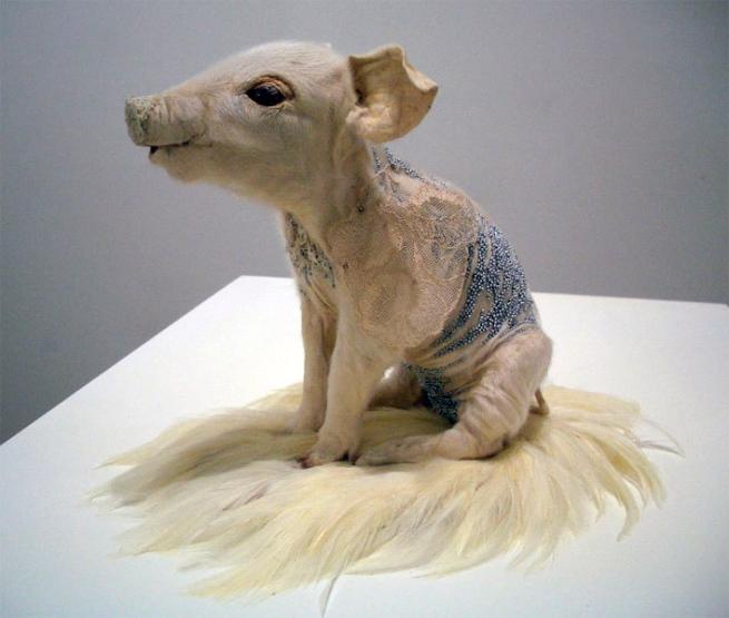 Julia de Ville. 'Piglet' 2009