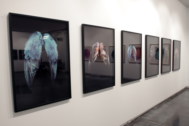 Installation view of 'Little Treasures' showing the work of CJ Taylor (2009)