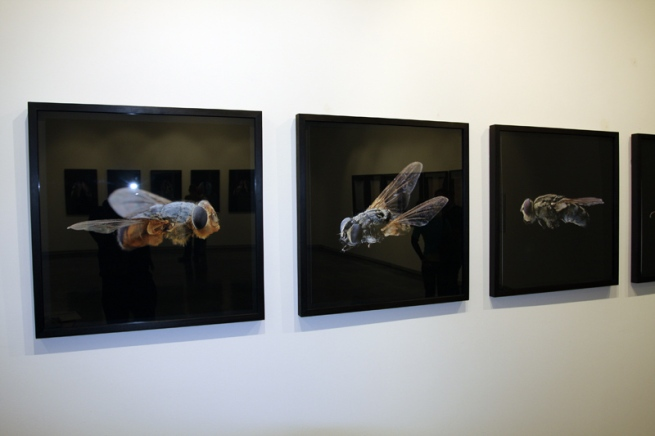 Installation view of 'Little Treasures' showing the work of Steve Wilson 'Fly' series (2009) at Helen Gory Galerie, Melbourne