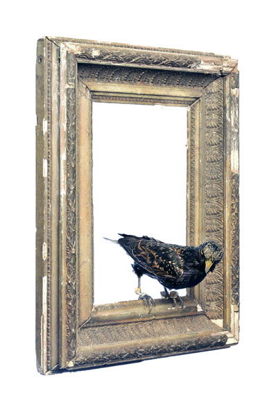 Julia de Ville. 'Ruby Heart Starling' 2008