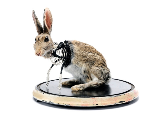 Julia de Ville. 'The Anatomy of a Rabbit' 2008