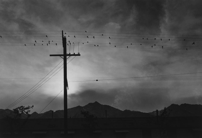 Ansel Adams. 'Birds on wire, evening, Manzanar Relocation Center' 1943