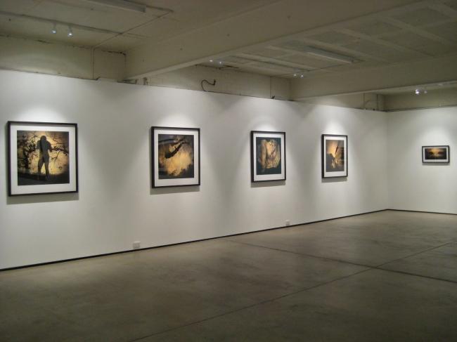 Installation view of 'Ivy' by Jane Burton at Karen Woodbury Gallery, Melbourne