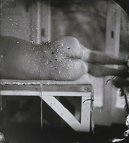 Sally Mann. 'Kingfisher's Wing' 2007