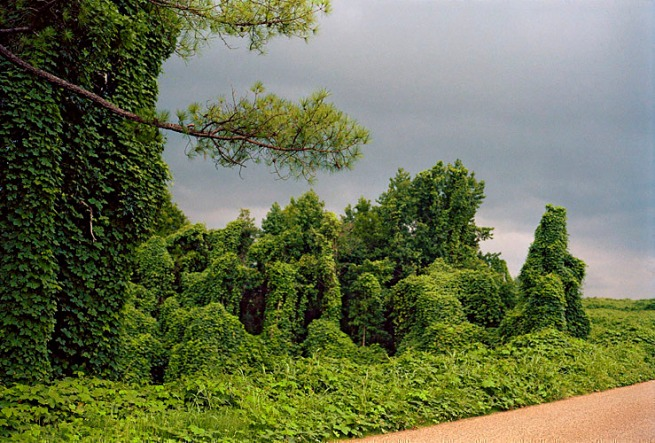 William Christenberry. 'Kudzu with Storm Cloud, near Akron, Alabama' 1981