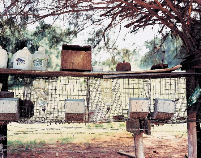 William Christenberry. 'Rabbit Pen, near Moundville, Alabama' 1998