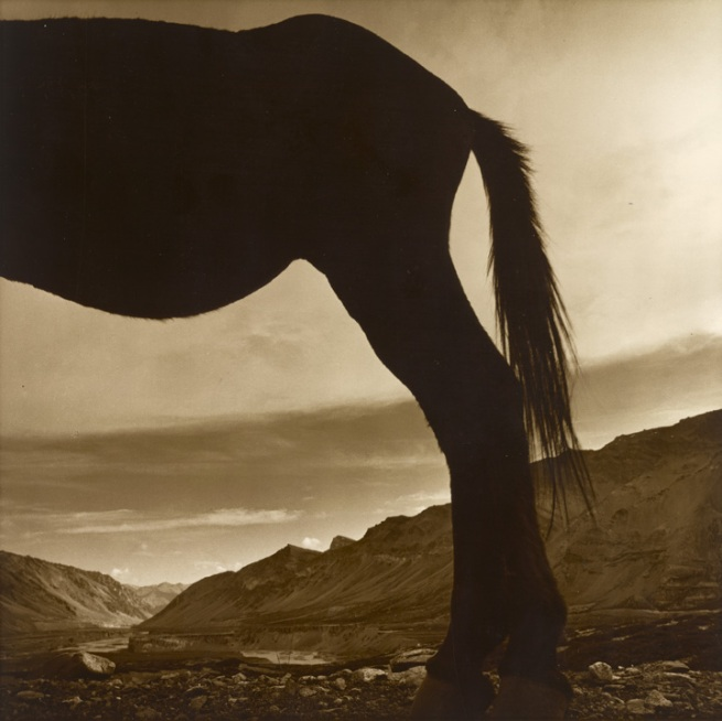 Max Pam. 'My donkey, our valley, Sarchu' 1977