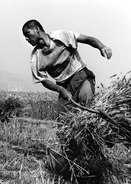 Hu Wugong. 'Migrant wheat farmer in the field in Guanzhong' 1998
