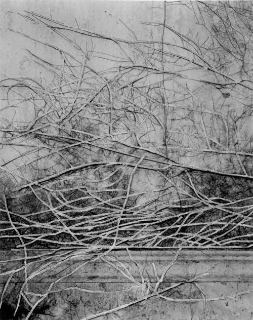 Simryn Gill. 'Forest #13' 1998