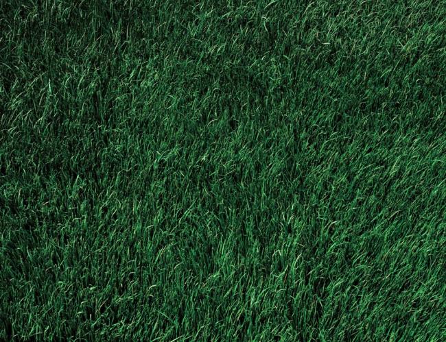 Thomas Demand(German, b. 1964) 'Lawn' 1998