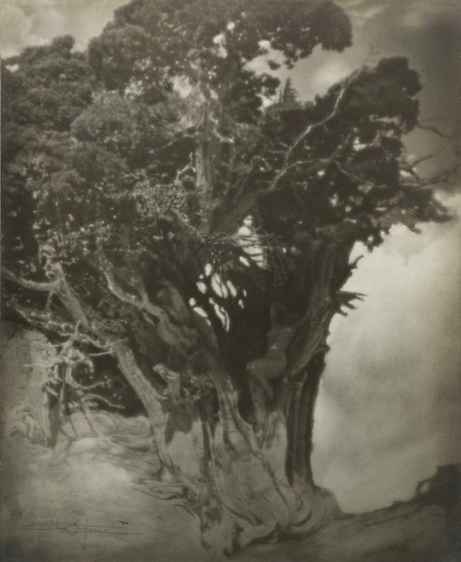 Anne W. Brigman (American, 1869-1950) 'The Hamadryads' c. 1910