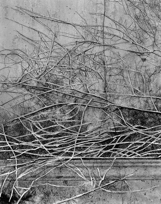 Simryn Gill(Australian, born Singapore 1959) 'Forest #13' 1998