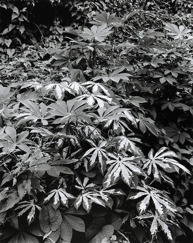 Simryn Gill(Australian, born Singapore 1959) 'Forest #5' 1998