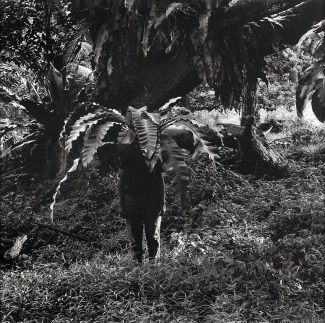 Simryn Gill(Australian, born Singapore 1959) 'Vegetation #1' 1999