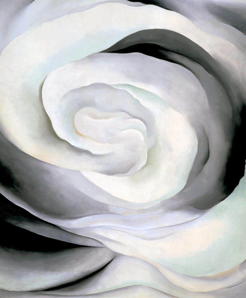 'Abstraction White Rose' 1927. Oil on canvas, 36 x 30 in.