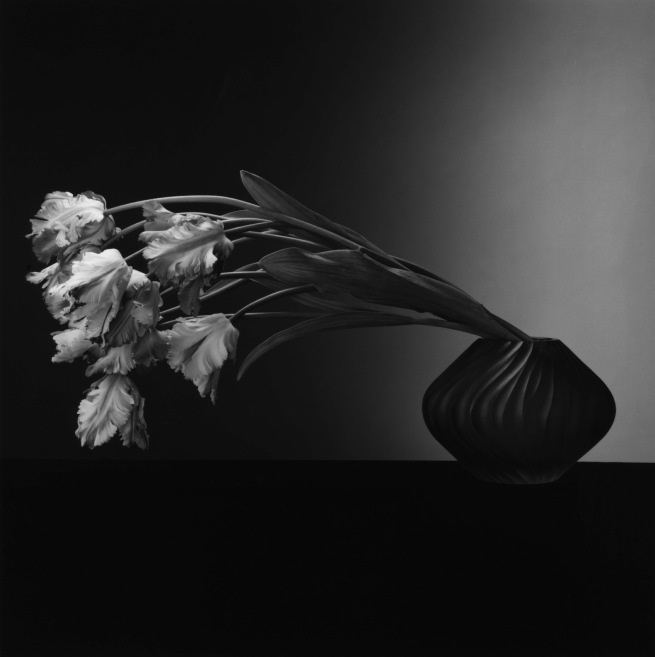 Robert Mapplethorpe. 'Parrot Tulips' 1988 © Robert Mapplethorpe Foundation. Used by permission