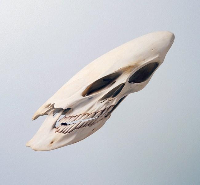 Robert Lazzarin. 'Skull' 2000
