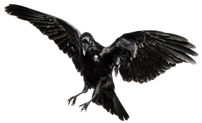 Julia deVille. 'Ghastly grim and ancient raven' 2010