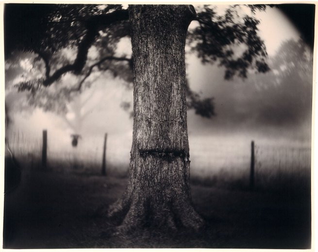 Sally Mann. 'Scarred Tree' 1996