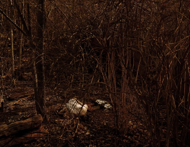 Taryn Simon. 'Forensic Anthropology Research Facility, Decomposing Corpse, University of Tennessee, Knoxville, Tennessee' 2003/2007