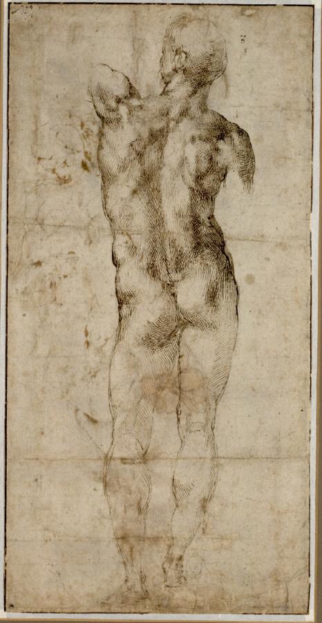 Michelangelo Buonarroti. 'Standing Male Nude Seen From Behind' 1501-04