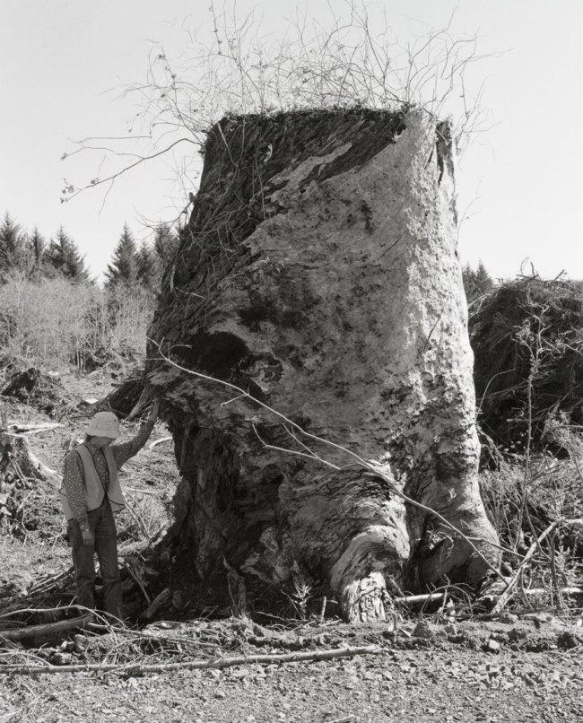 Robert Adams. 'Kerstin, Next to an Old-Growth Stump, Coos County, Oregon' 1999-2003