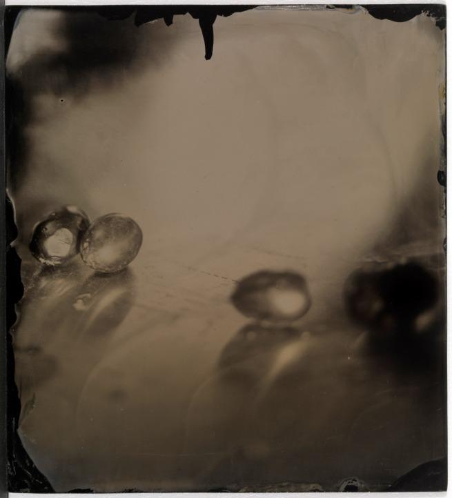 Sally Mann. 'Untitled (Still Life)' 2006