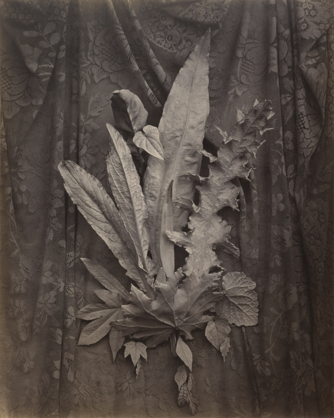Charles Aubry (French, 1811-1877) '[An Arrangement of Tobacco Leaves and Grass]' about 1864